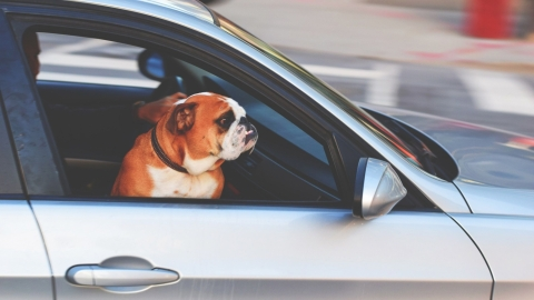 5 Tips for travelling with your pet in your car